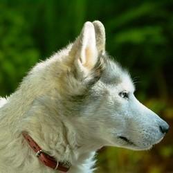chien plus vieil ami de l'homme