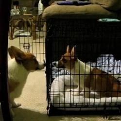 chien prison break video