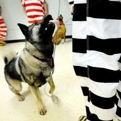 chien éducation prison