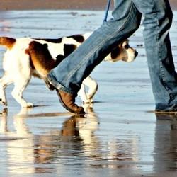 bienfaits chien sur la santé