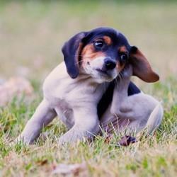 Comment soulager chien qui se gratte la r ponse est sur for Koi qui se gratte