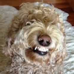 video de chien qui sourit