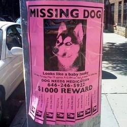 chien recherche par la police