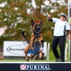 chien record saut en longueur