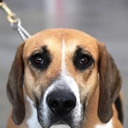 adoption chien refuge idées reçues