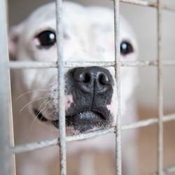 Un éleveur de chiens et chats condamné pour maltraitance