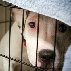 Des chiens et chats malraités sauvés par la spa