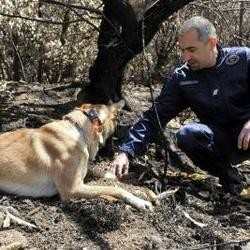 chien renifleur policier incendies