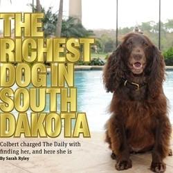 chien riche cocker dakota sud