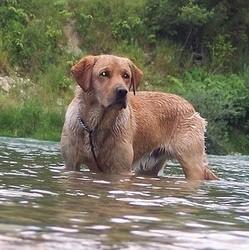 un chien sauvé de la noyade