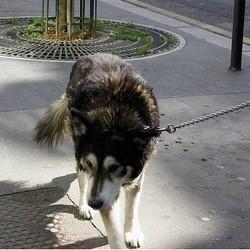 chien rue paris