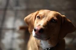 chien sans pattes