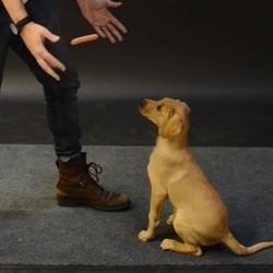 chien magicien