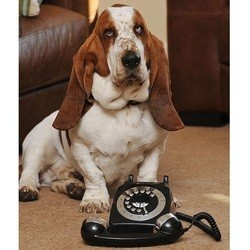chien appelle secours telephone