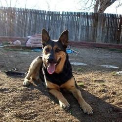 Un chien blessé et abandonné en montagne par son maître, est sauvé par des randonneurs