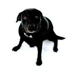 chien sauvetage gouffre
