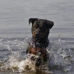 Un homme se noie en tentant de sauver un chien