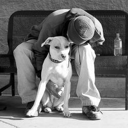 SDF sans abris et leurs chiens