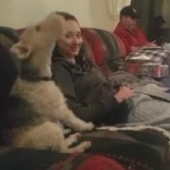 ce chien faitun skype avec un autre chien