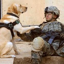chien soldat usa irak