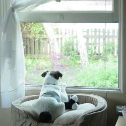 chien solitude