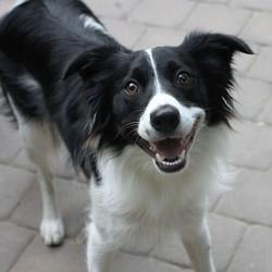 chien heureux sourire