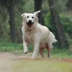 chien sourire