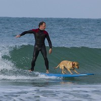 video chien surf