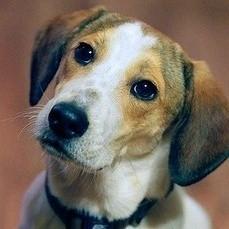 chien survit chambre à gaz euthanasie