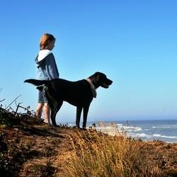 un chien survit d'une chute falaise