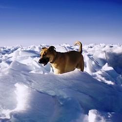chien survit eau glacée
