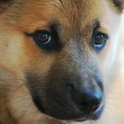 chien survit incendie usa plymouth