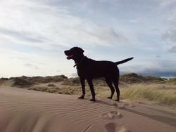 chien survivant île
