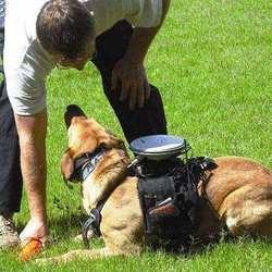 chien télécommandé chien policier chien renifleur