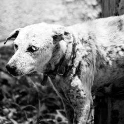 cruauté envers animaux torture chien