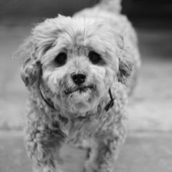 trafic de chien les responsables et les risques