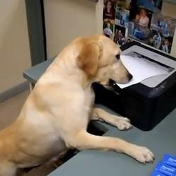 chien travail assistant secretaire video