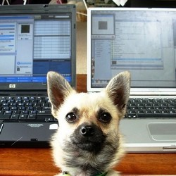 chien lieu de travail productivité