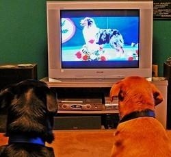 les chiens stars du petit écran