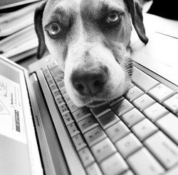 Pyppy Tweets gadget pour chien Twitter