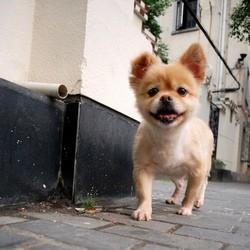chien unique chine shanghai