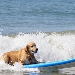 vacances de luxe pour chien