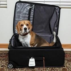 chien valise