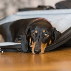 faire garder son chien pendant l 39 t conseils et solutions voyager et jouer avec son chien. Black Bedroom Furniture Sets. Home Design Ideas
