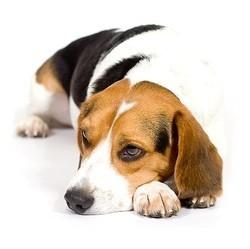 vétérinaire santé comportement chien