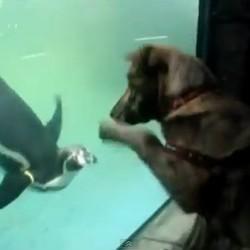 chien veut jouer avec un pingouin dans un zoo