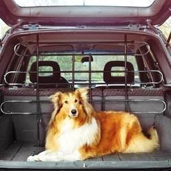 voiture avec son chien transport cage laisse