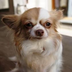 chien volé retrouvé petites annonces leboncoin