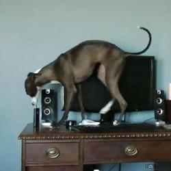 chien cleptomane video fun
