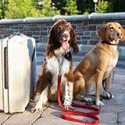 Un chien voyageant avec Pet Airways
